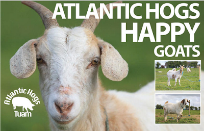 "Goat in a grassy meadow, ""Atlantic Happy Hogs"" brand"