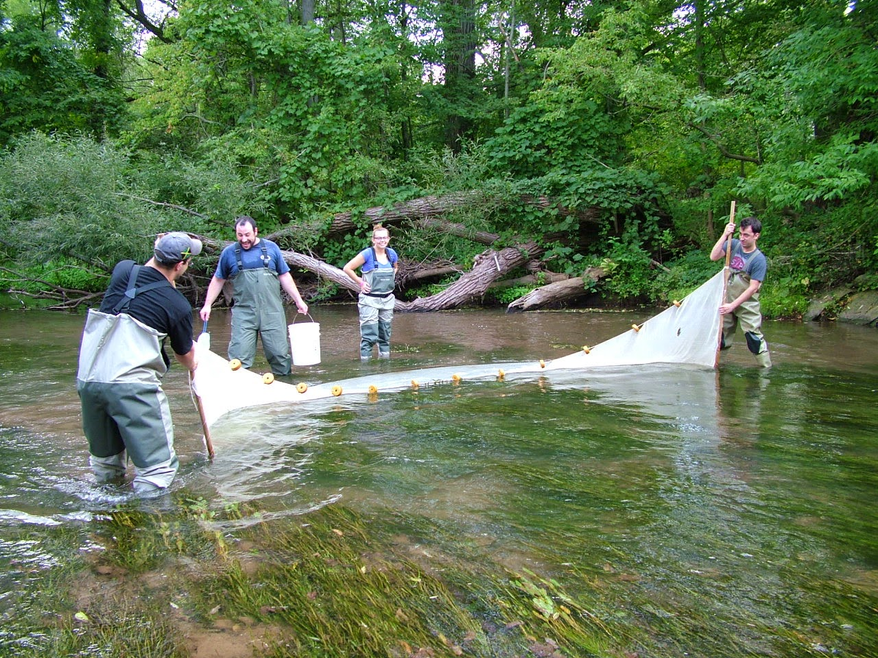 Men fishing a river with a net