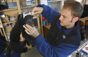 Man measuring a bear cub