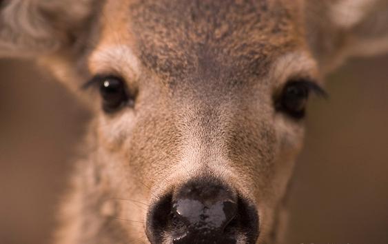 deer-hunting