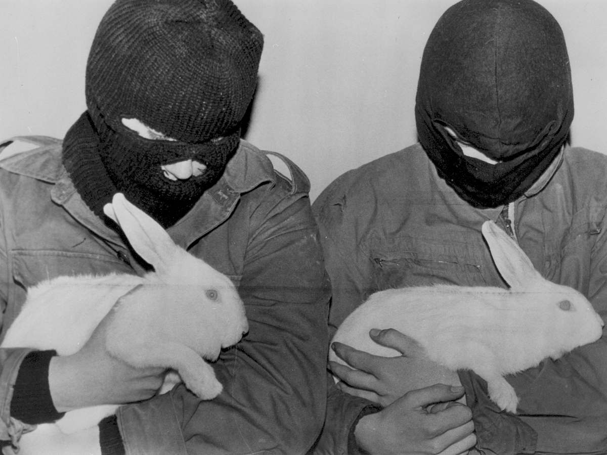 animal-terrorists